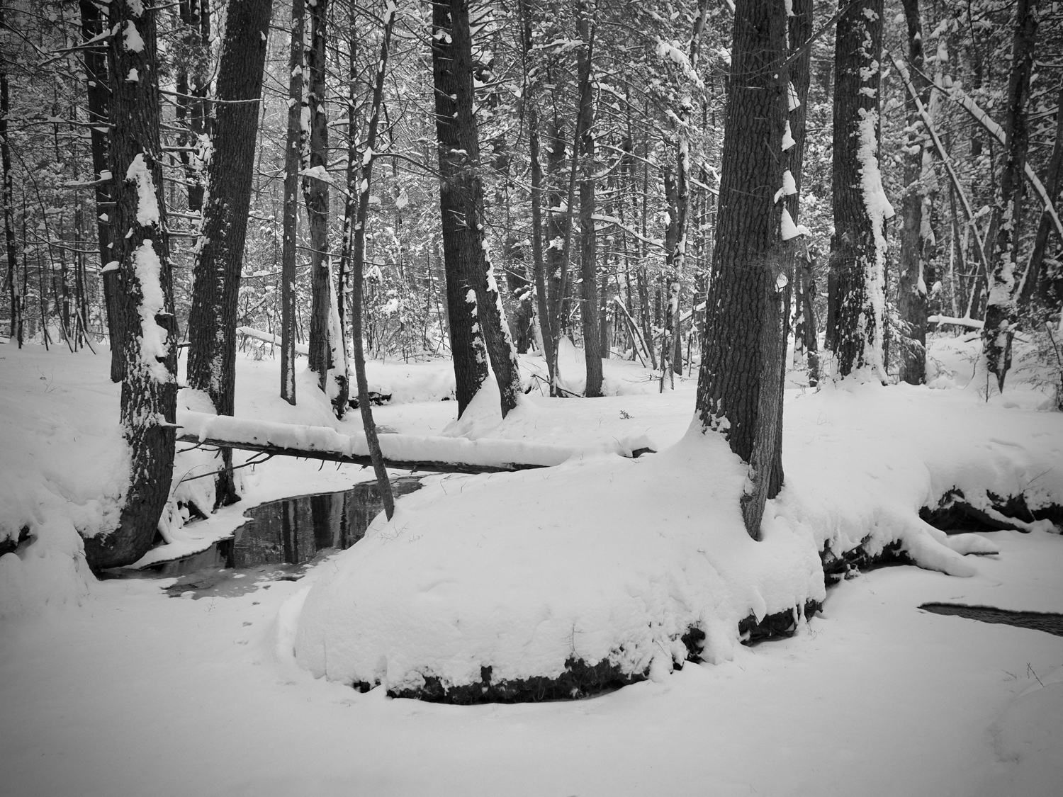 A winding stream in a snow-covered wood — copyright Trace Meek